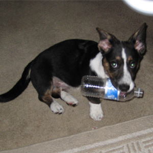Did you know if you bite a bottle all the water will run out?  Hey!  Notice the ears?