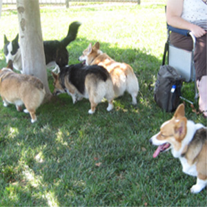 The place was called a Dog Park.  I loved it!  No leashes!  I had lots of fun!