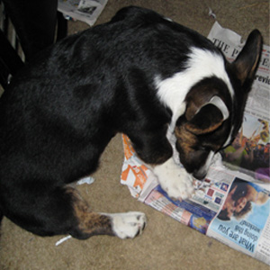 I read the paper!  Nothing very interesting.