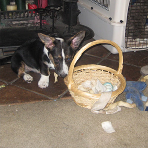 This is my toy basket!