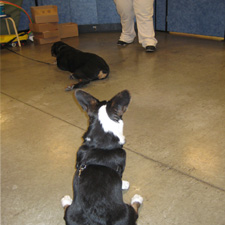 I tried to be a good listener this time, but all I could think about were the treats on the teacher's belt.